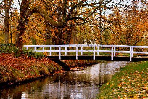 Autumn Stream (www.redbubble.com). Stunning Photos From Around the World