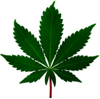 The Botany of Desire Cannabis