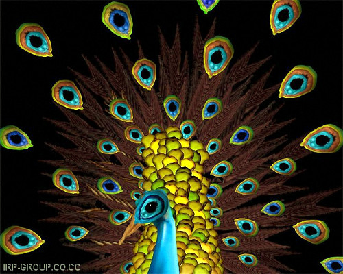 Human Peacock