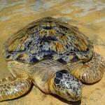 Turtle Island Indonesia