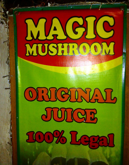 Magic Mushrooms in Bali 7